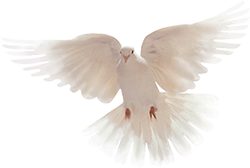 Christian dove png. Free gifs animations clipart