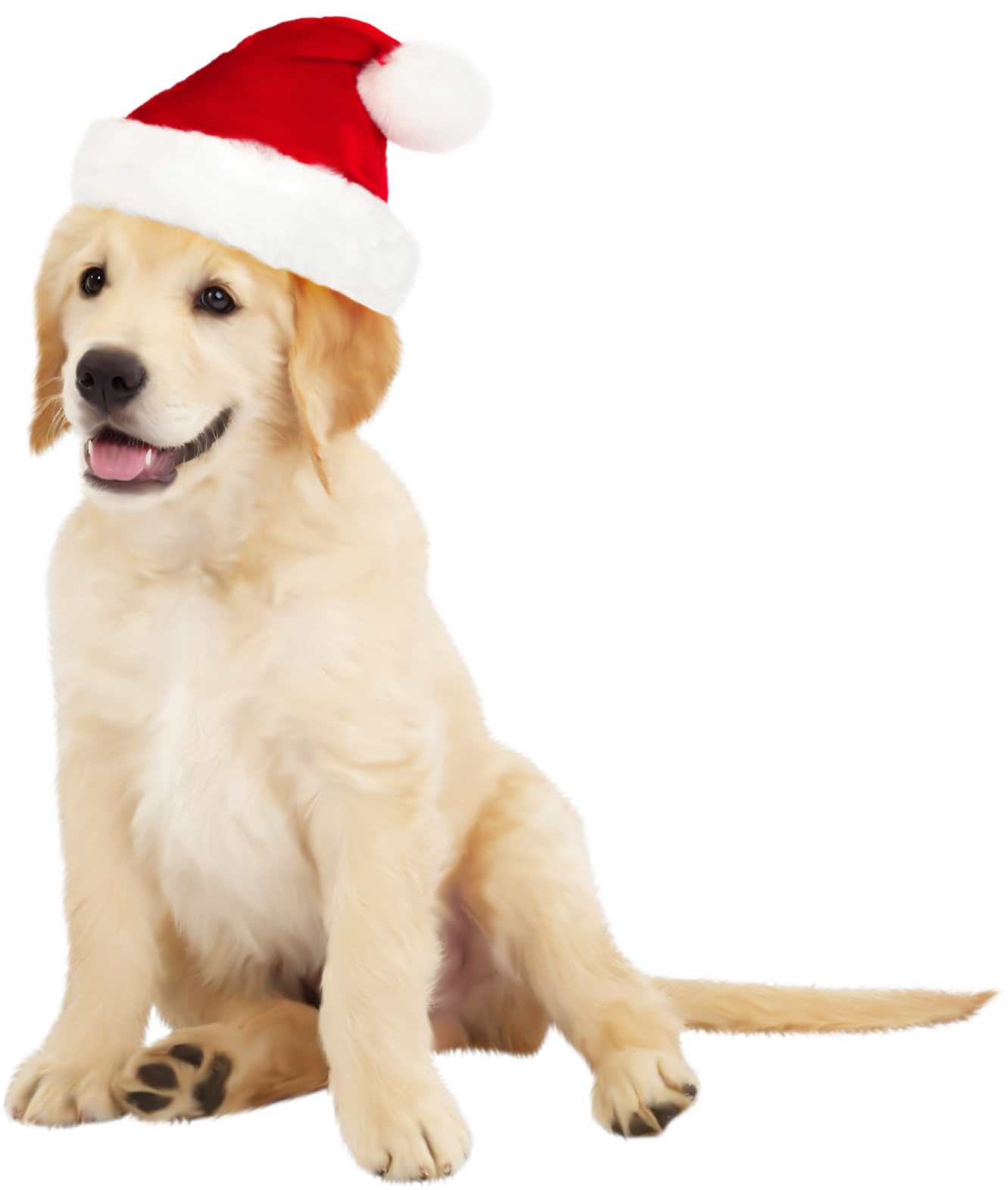 Cute dog png. With santa hat clipart