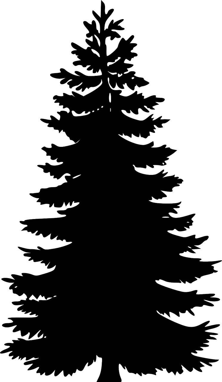 Pine drawing shadow. How to draw a