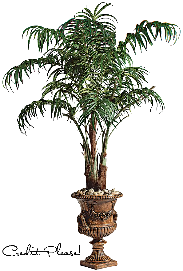 Potted palm tree png. In a pot stock