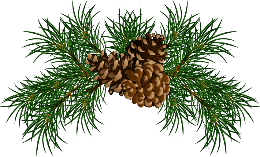 Christmas pine cone png. Free images toppng transparent