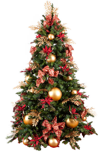 Christmas pine png. Download tree free transparent