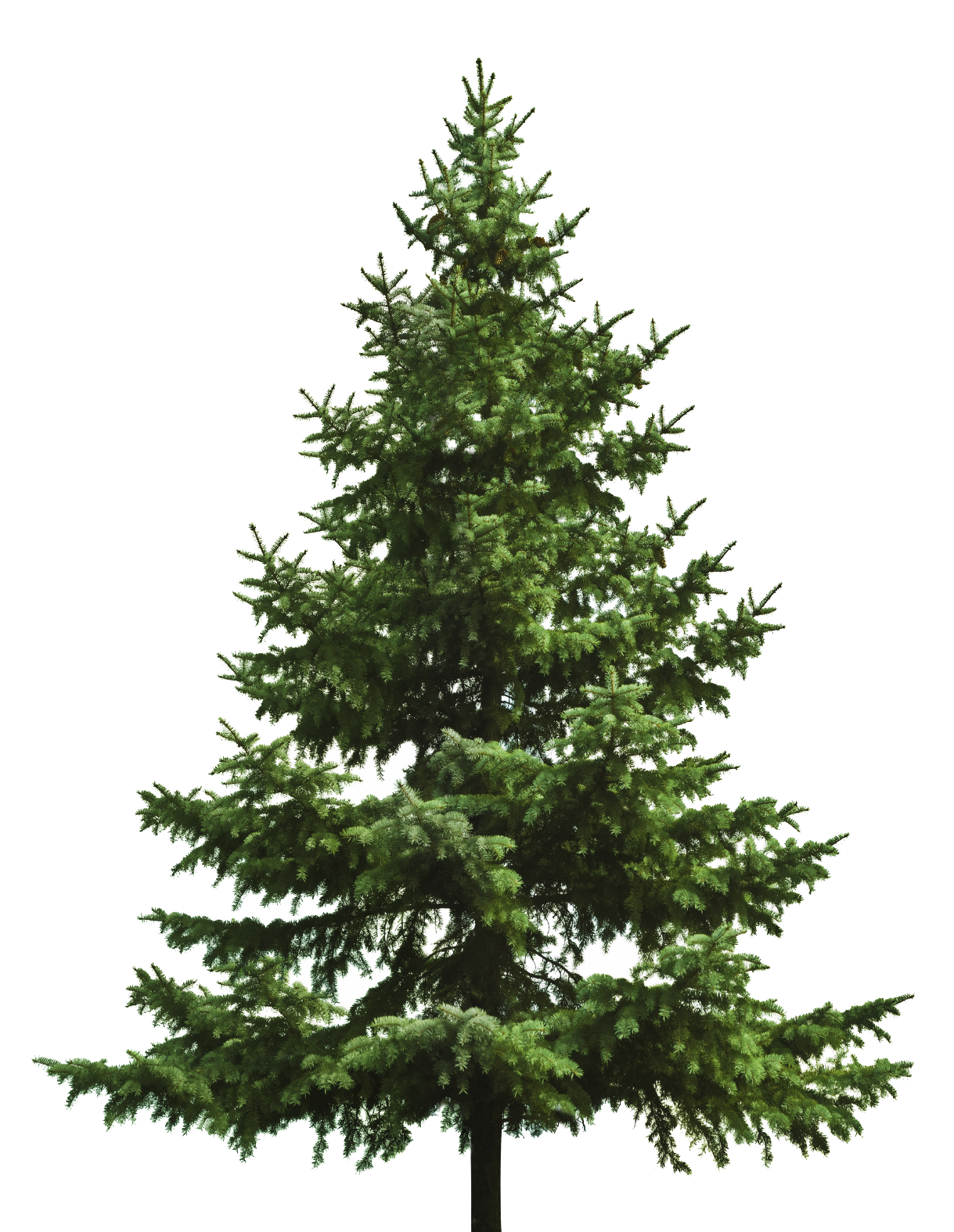 Christmas pine tree png. Free download of icon