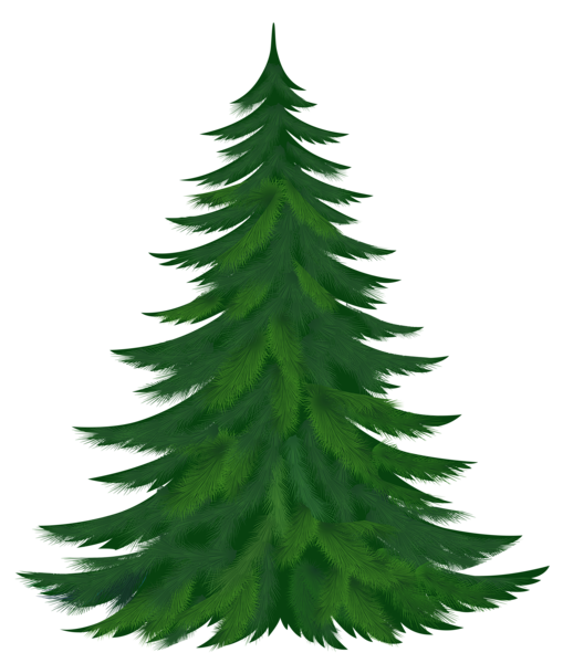 Christmas pine tree png. Transparent picture pinterest