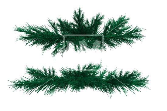 Pine fir png. Branches welcomia imagery stock