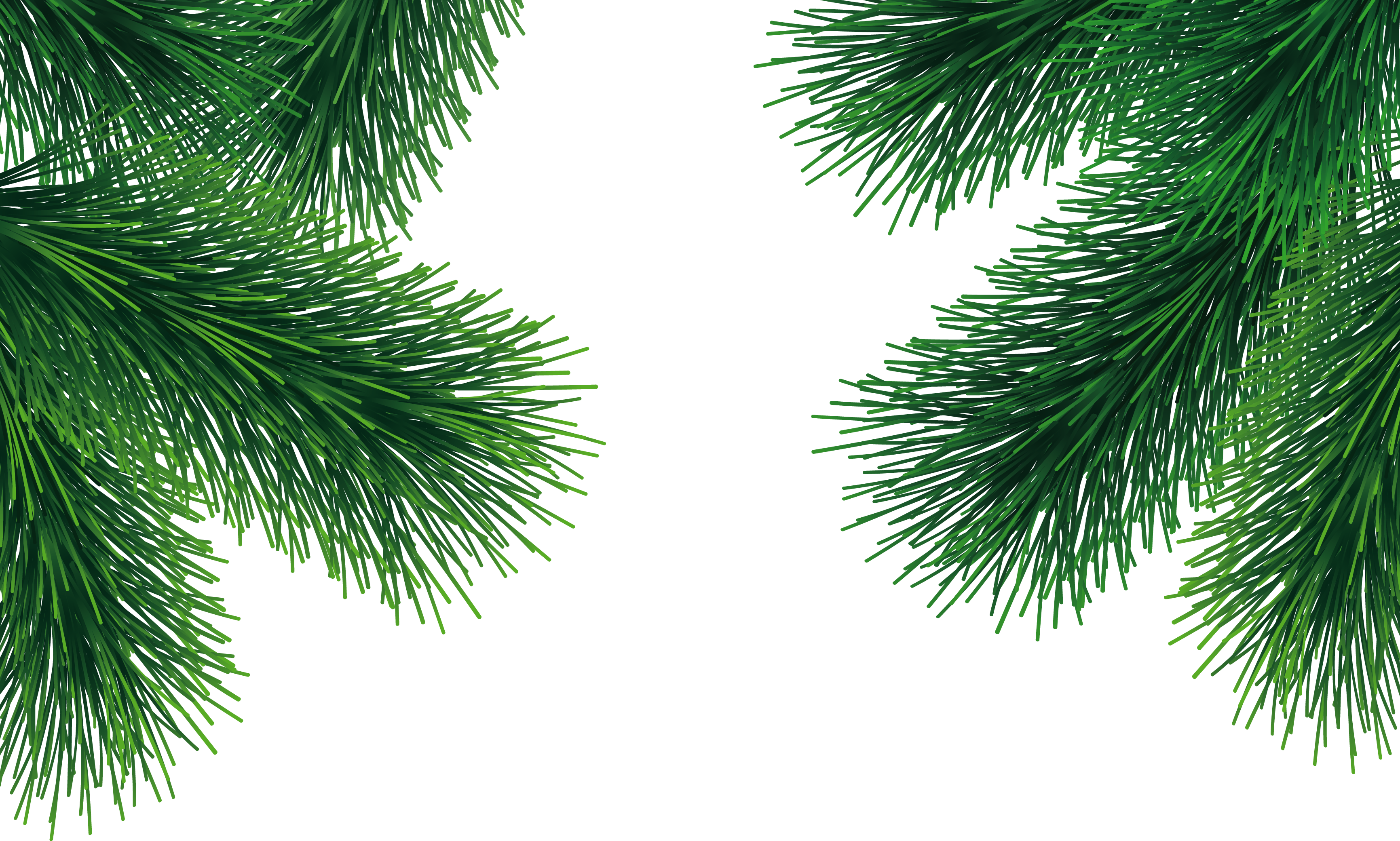 Palm tree christmas tree png. Fir image purepng free