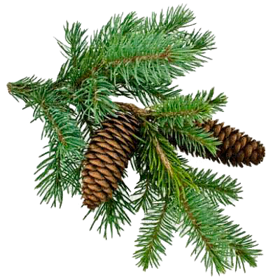 Pine tree branches png. Christmas branch gif picmix