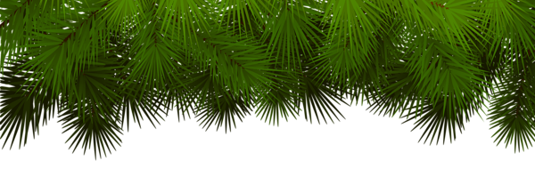 Classic vector decorative branch. Christmas tree branches png