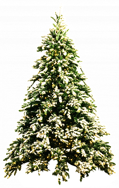 Snow trees png. Christmas tree by dbszabo
