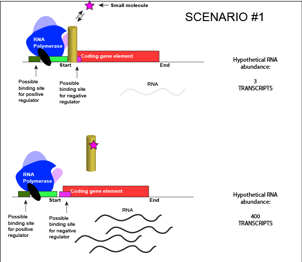 Chromatin drawing transcription factor. Lecture regulating gene expression