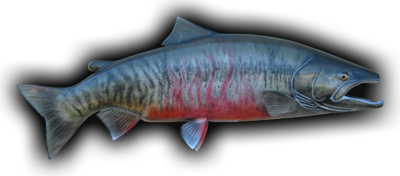 Chum salmon png. Fish mount and replicas