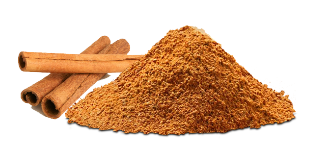Cinnamon vector masala. Spices rawfeed agro whole