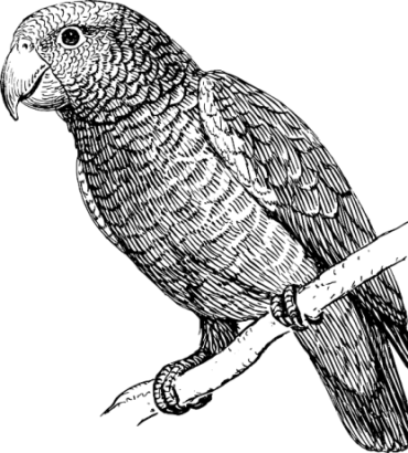 Cintiq drawing parrot. How to draw a