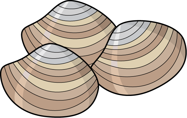 clam clipart clamshell