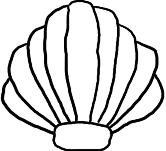 Clam clipart clamshell. Shell drawing at getdrawings
