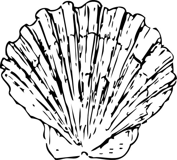 clam vector shellfish