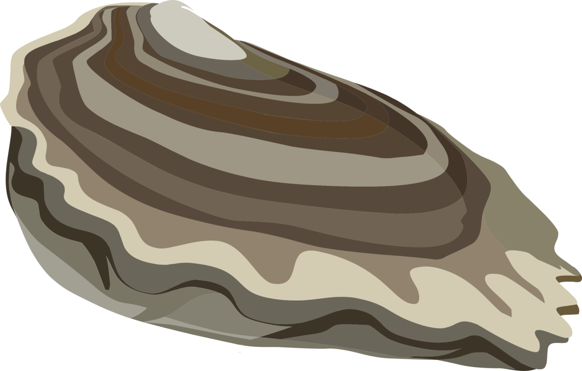 Clam vector clipart. Oyster computer icons mussel