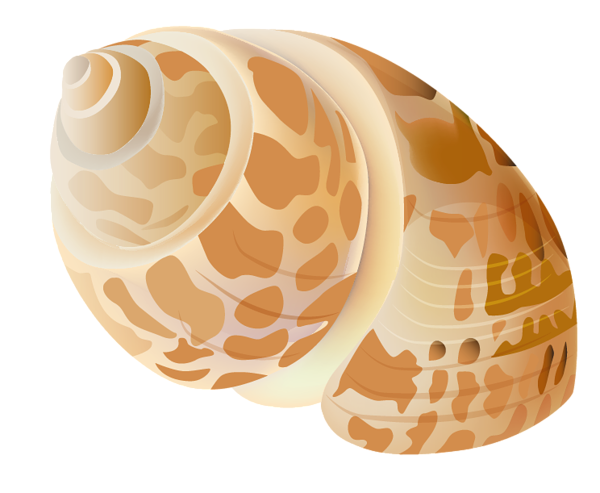 Clam vector shell sea. Transparent seashell png picture