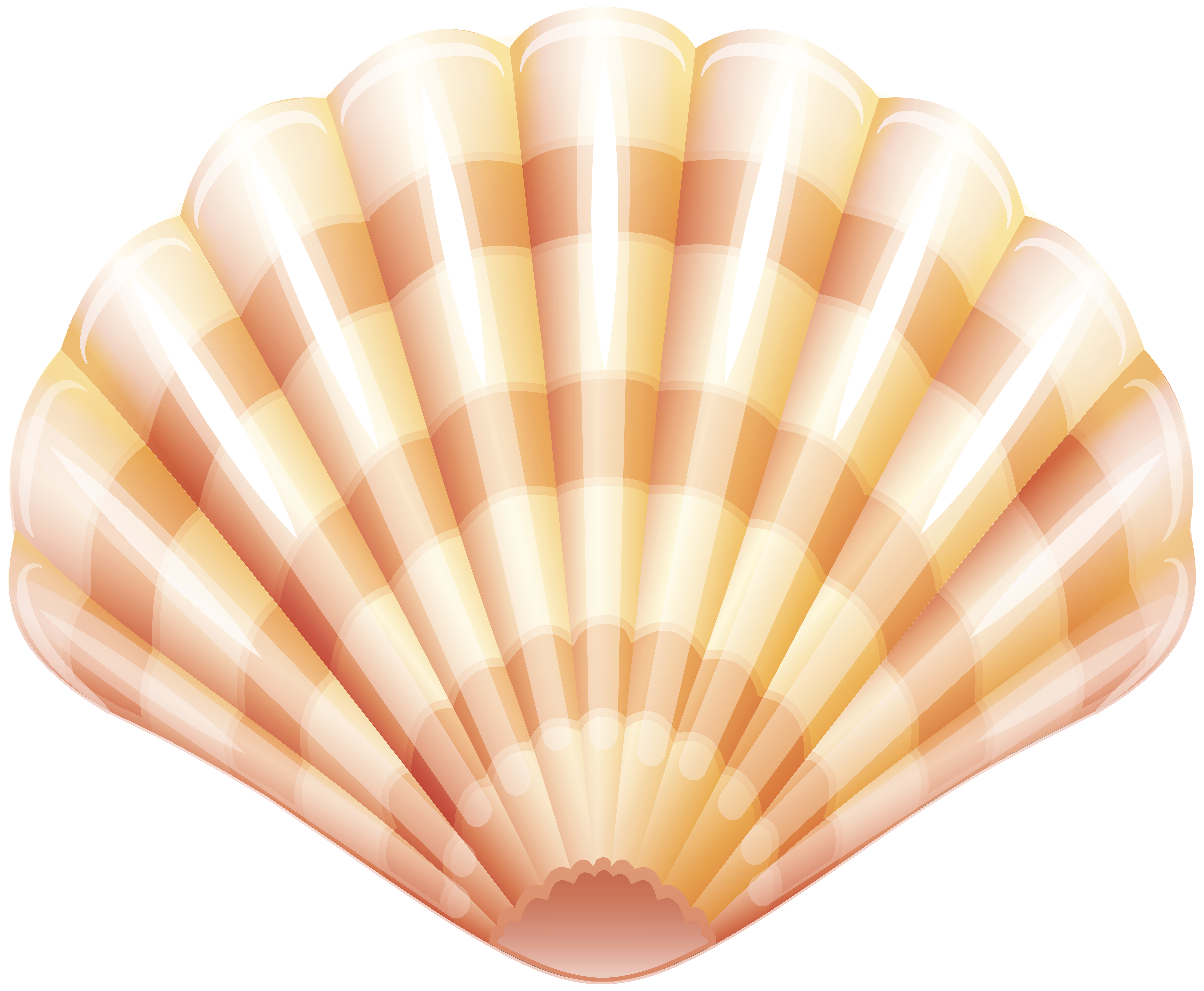 Clam vector shellfish. Seafood graphic royalty
