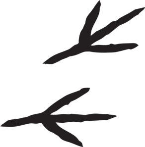 Claws vector foot. Bird claw encode clipart