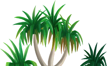 Climate drawing tropical. Collection of high