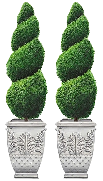 Climber clipart vertical garden. Potted topiaries yeniler topiary