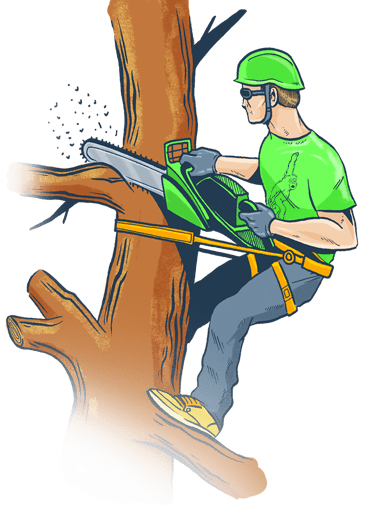 Clip cut trees. Commonly asked questions