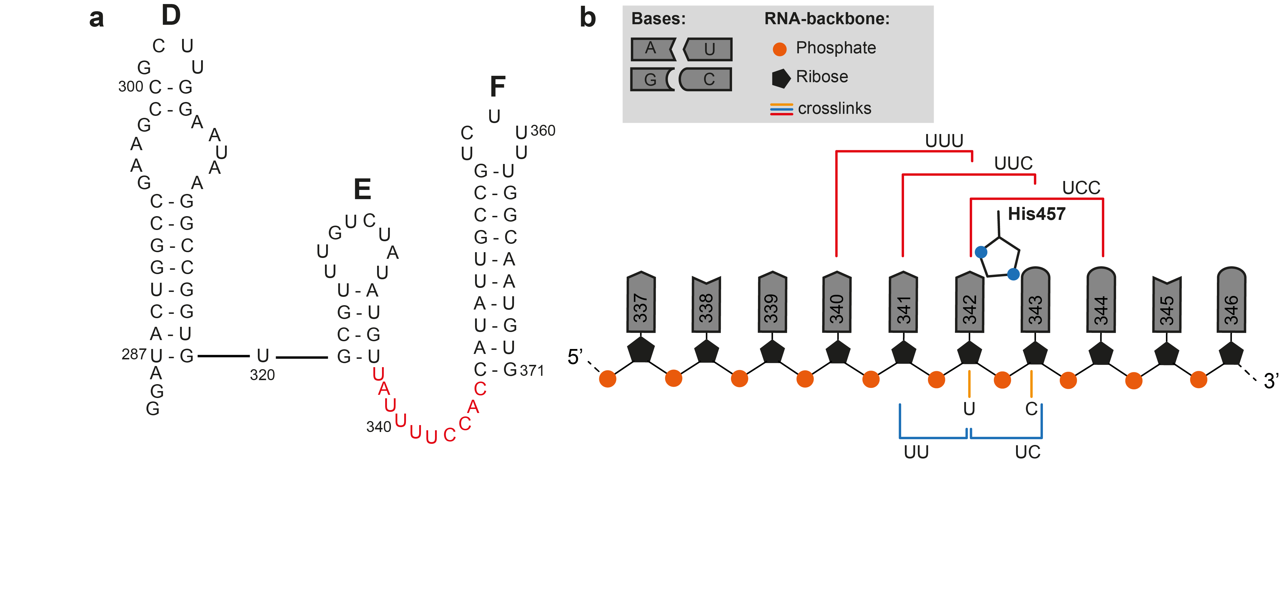 Clip rna cross linking. Mapping protein interactions with