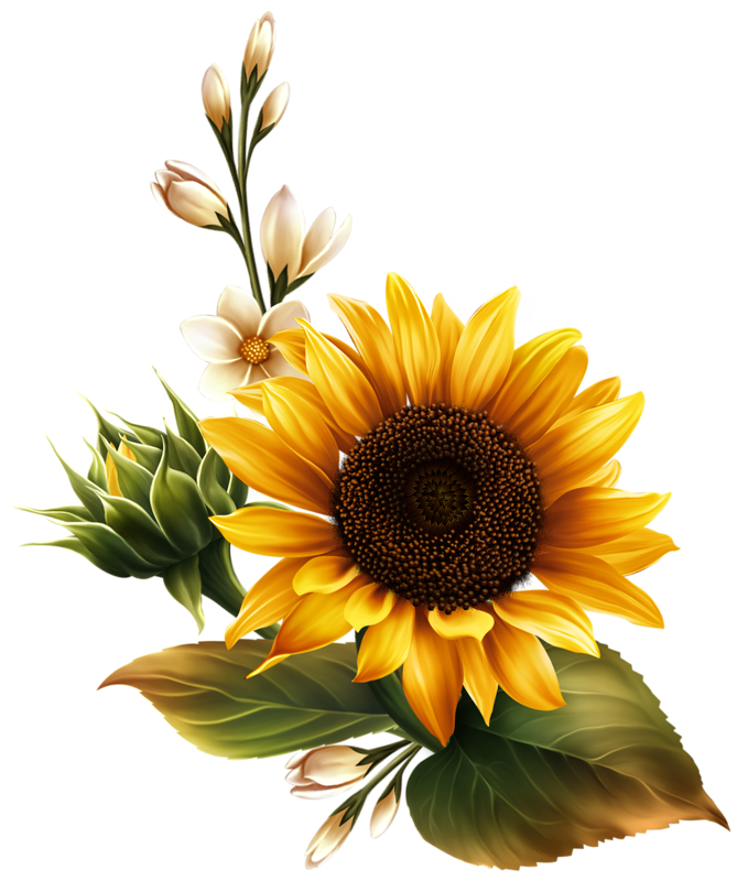 Sunflowers png flower crown. Pin by hala katergi