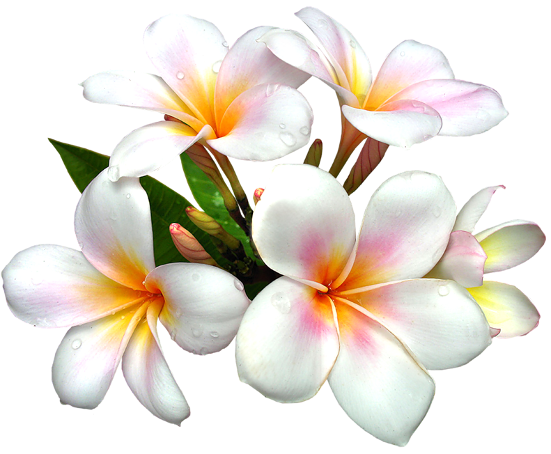 Clipart flower png. White large gallery yopriceville