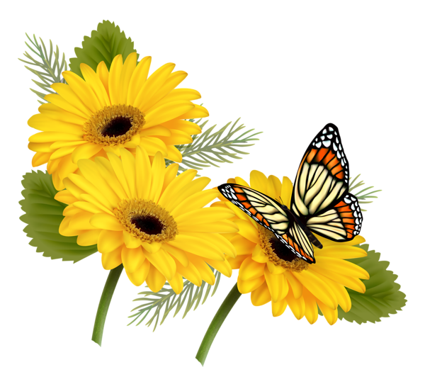 Clipart flowers and butterflies png. Yellow gerberas with butterfly
