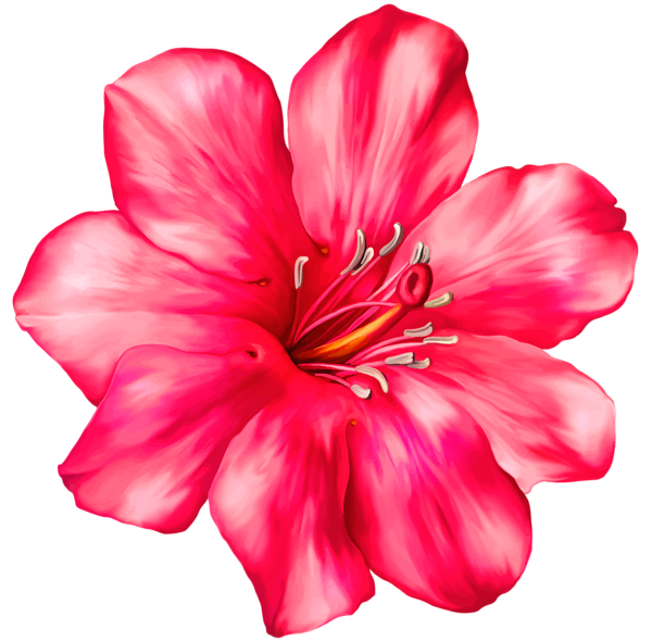 Tropical flower watercolor png. Exotic pink clipart picture
