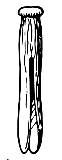 Clothespin vector. Free art images from