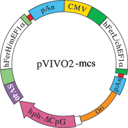 Vector expressions mammalian expression. Pvivo mcs dual plasmids
