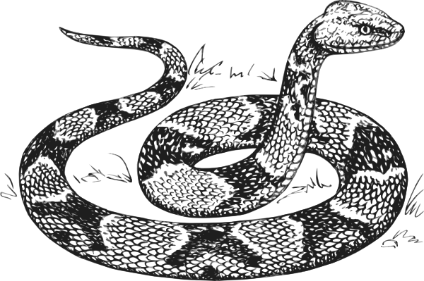 Cobra clipart reptile. Sketch free king snake