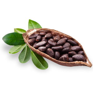 Coco butter png. Cacao