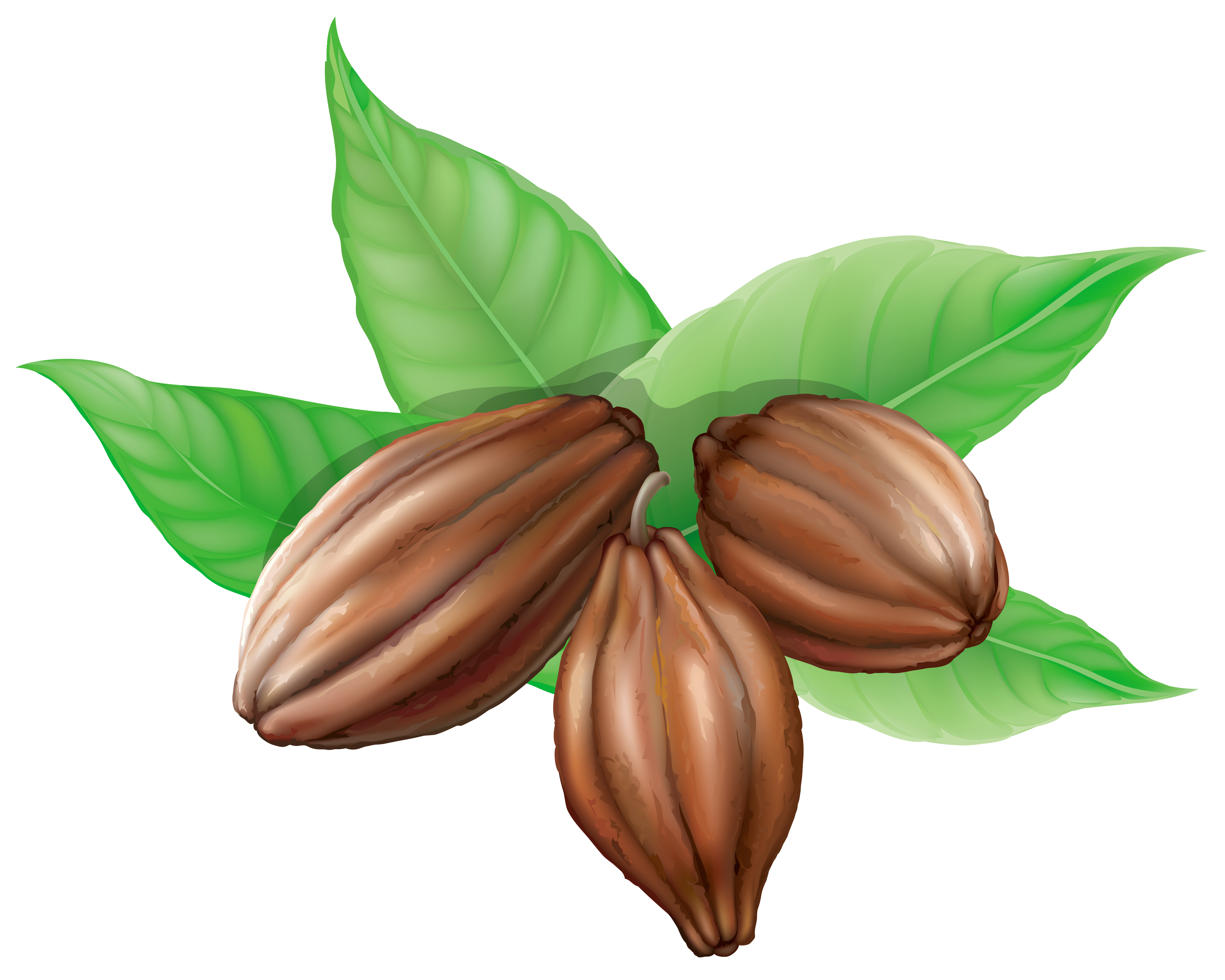 Cocoa clipart. Beans png picture gallery
