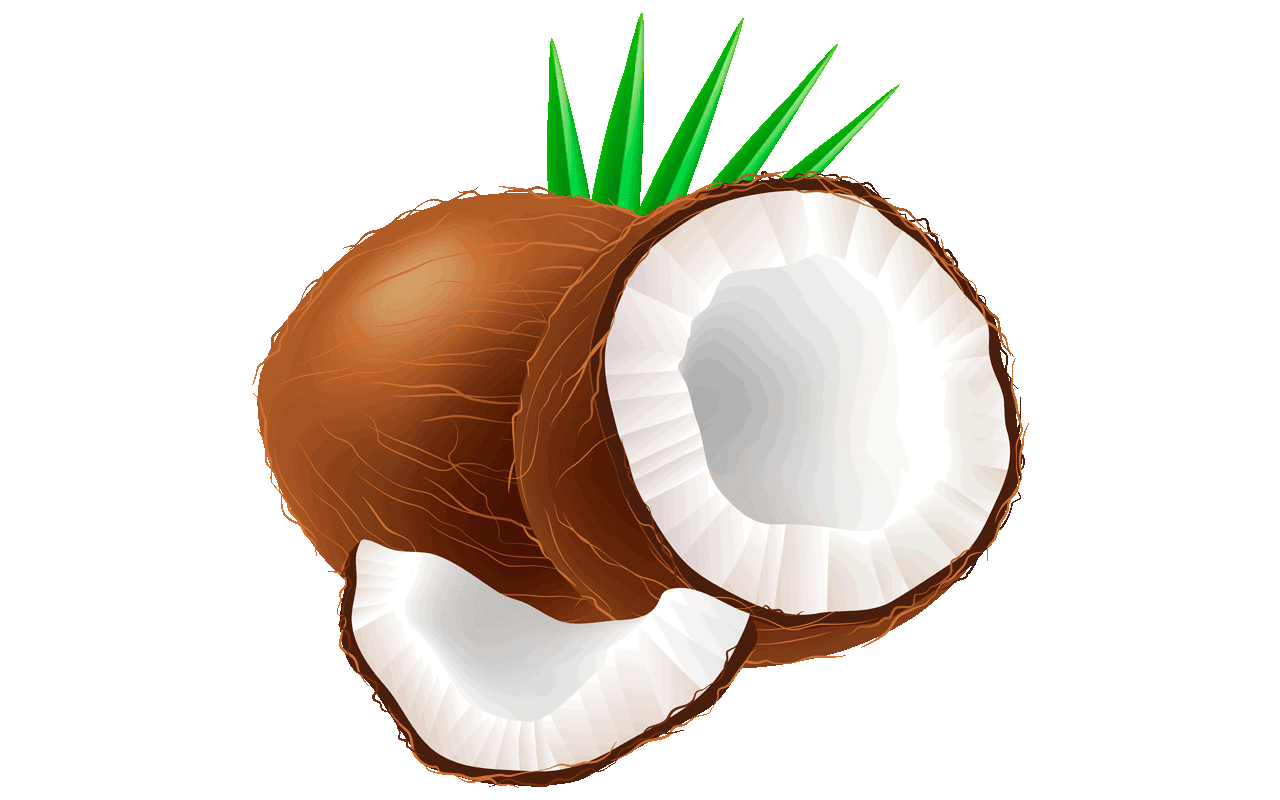 Coconut clipart. At getdrawings com free
