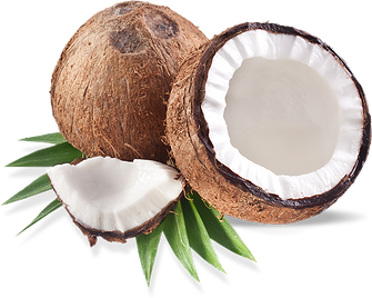 Coconut clipart coconut bunch. Lavender extract the mama