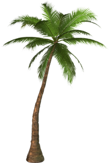 Palm tree watercolor png. Pin by naenae nanny