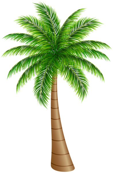 Tree large png clip. Palm clipart palm leaf svg free library
