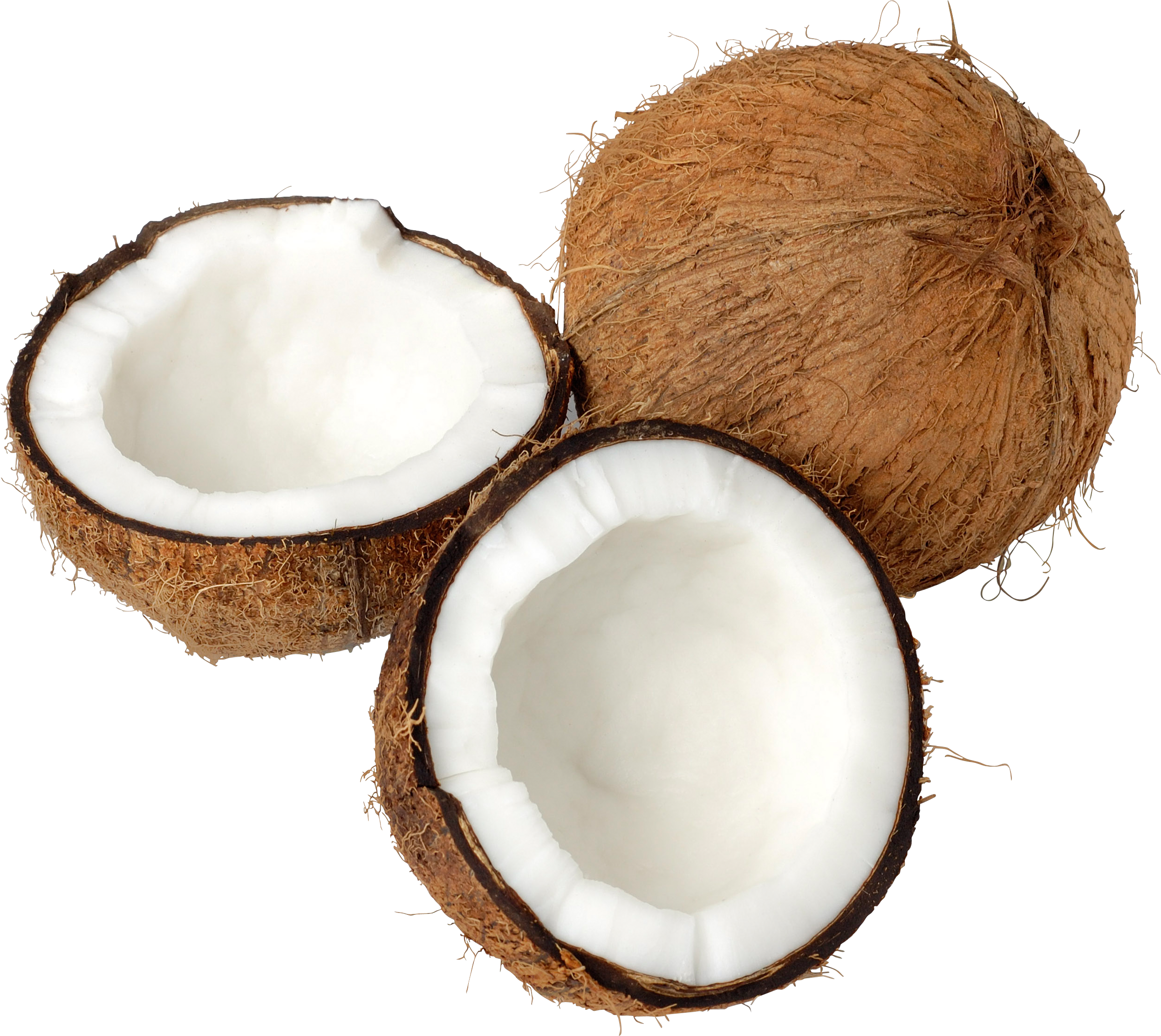 Coconuts vector coconut drink. Png images free download
