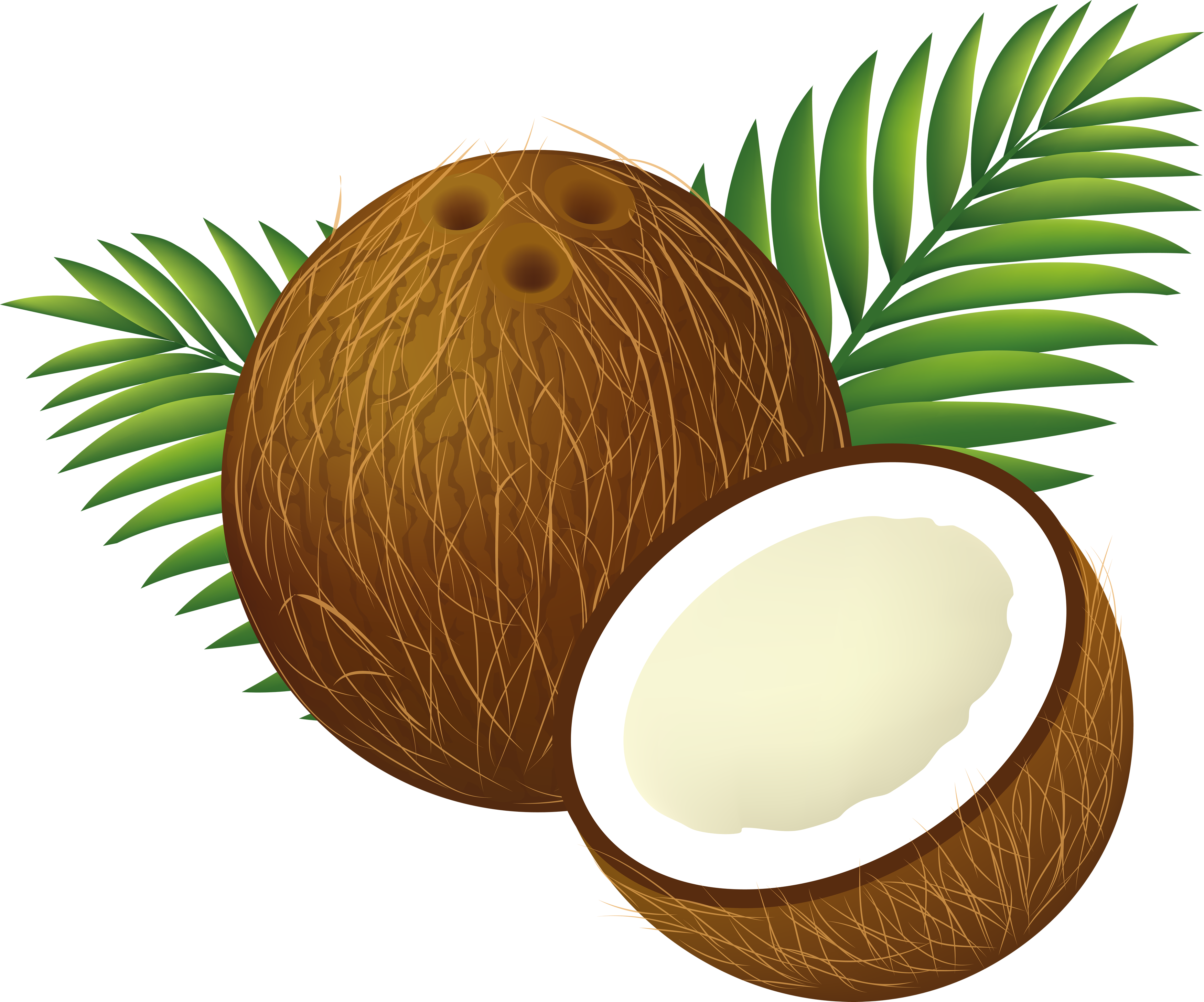 Coconut clipart png. File cartoon wikimedia commons