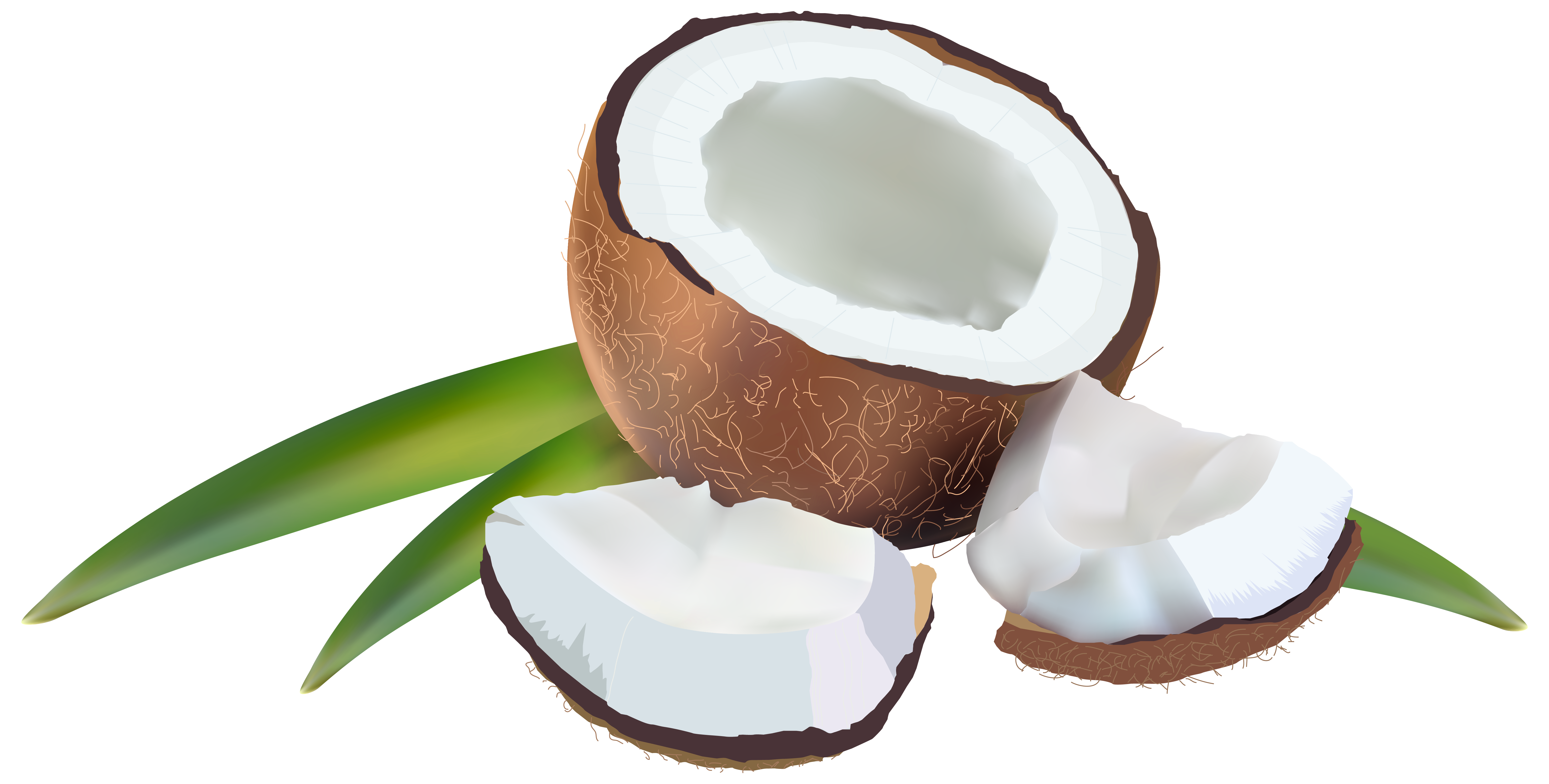 Coconut clipart transparent background. With leaves png image