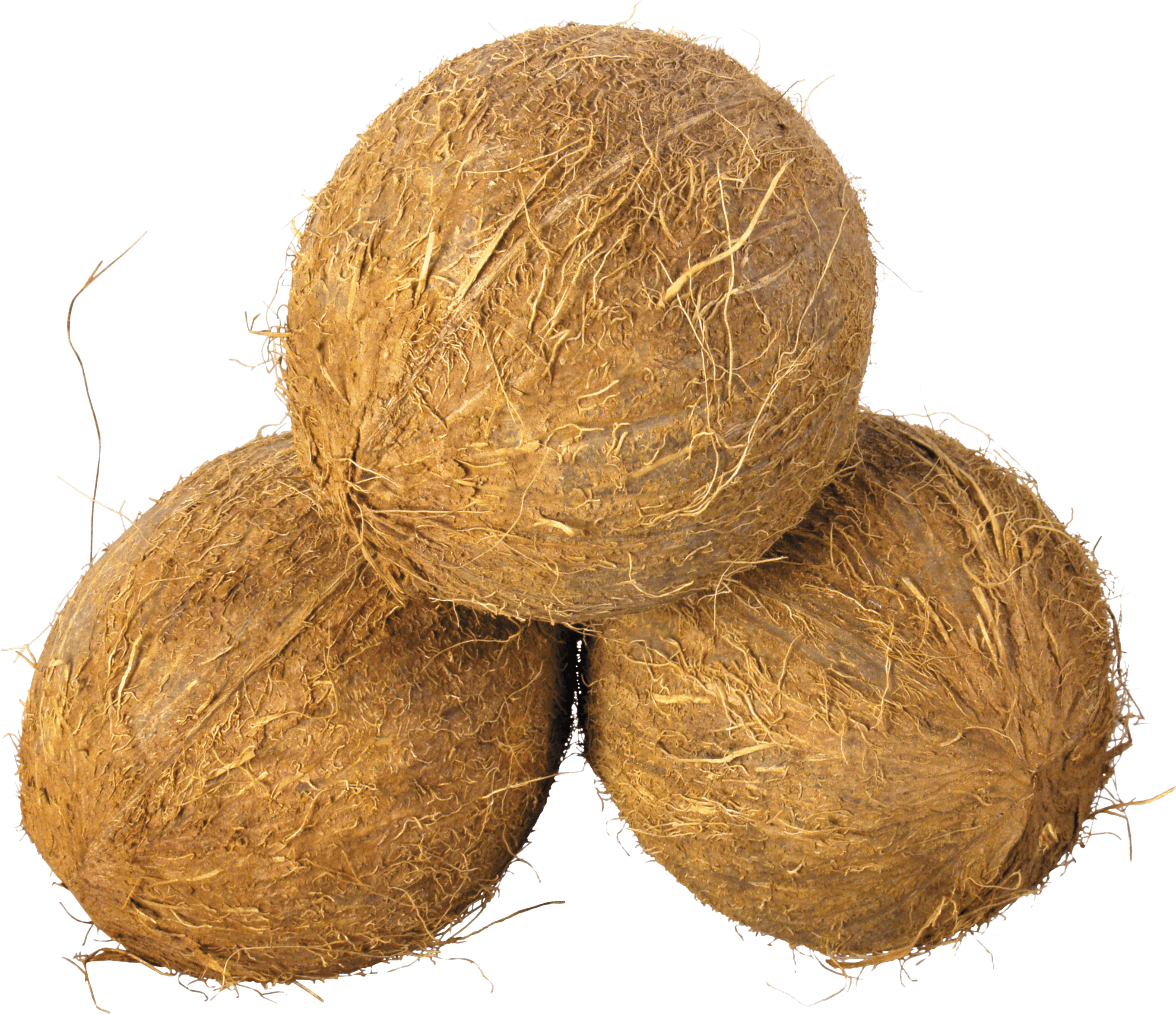 Coconut png images. Trio transparent stickpng