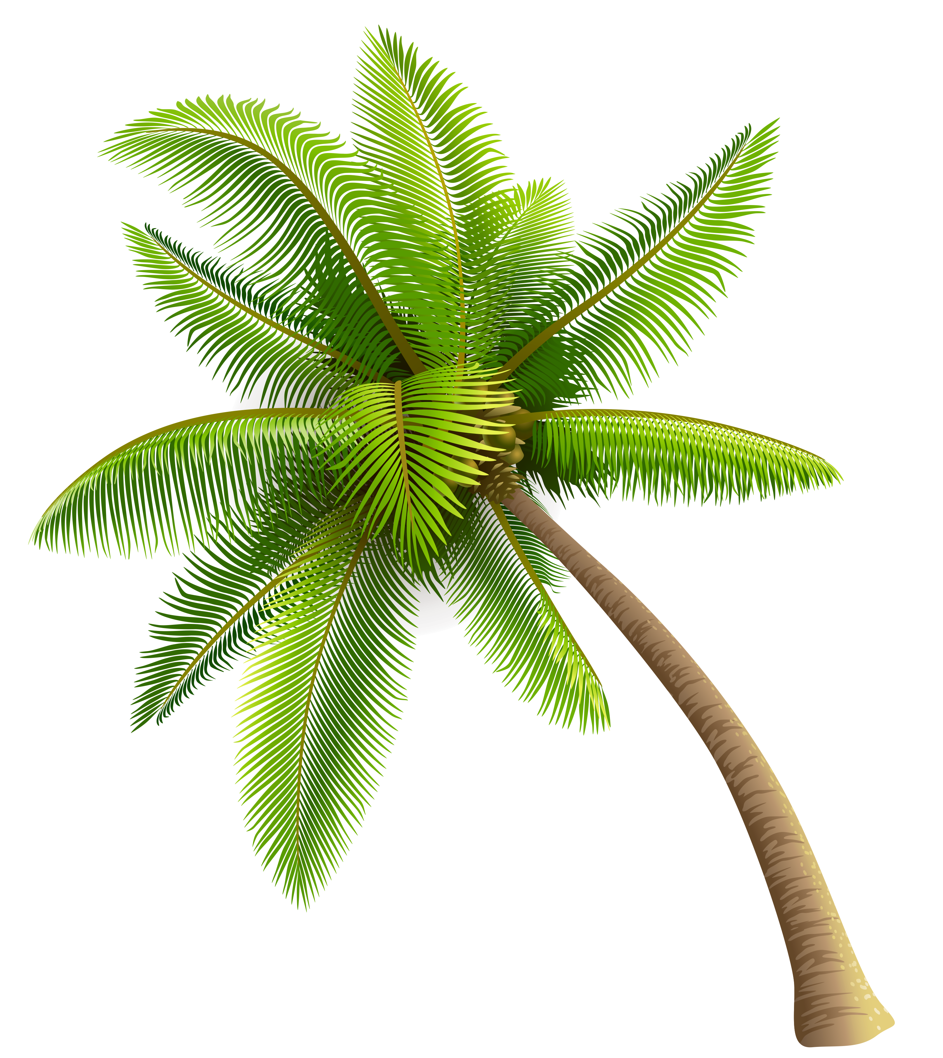 Curved palm tree png. Ides dimages de coconut