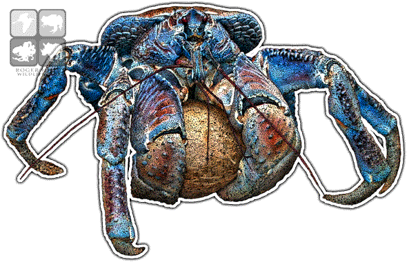 crabs drawing draw
