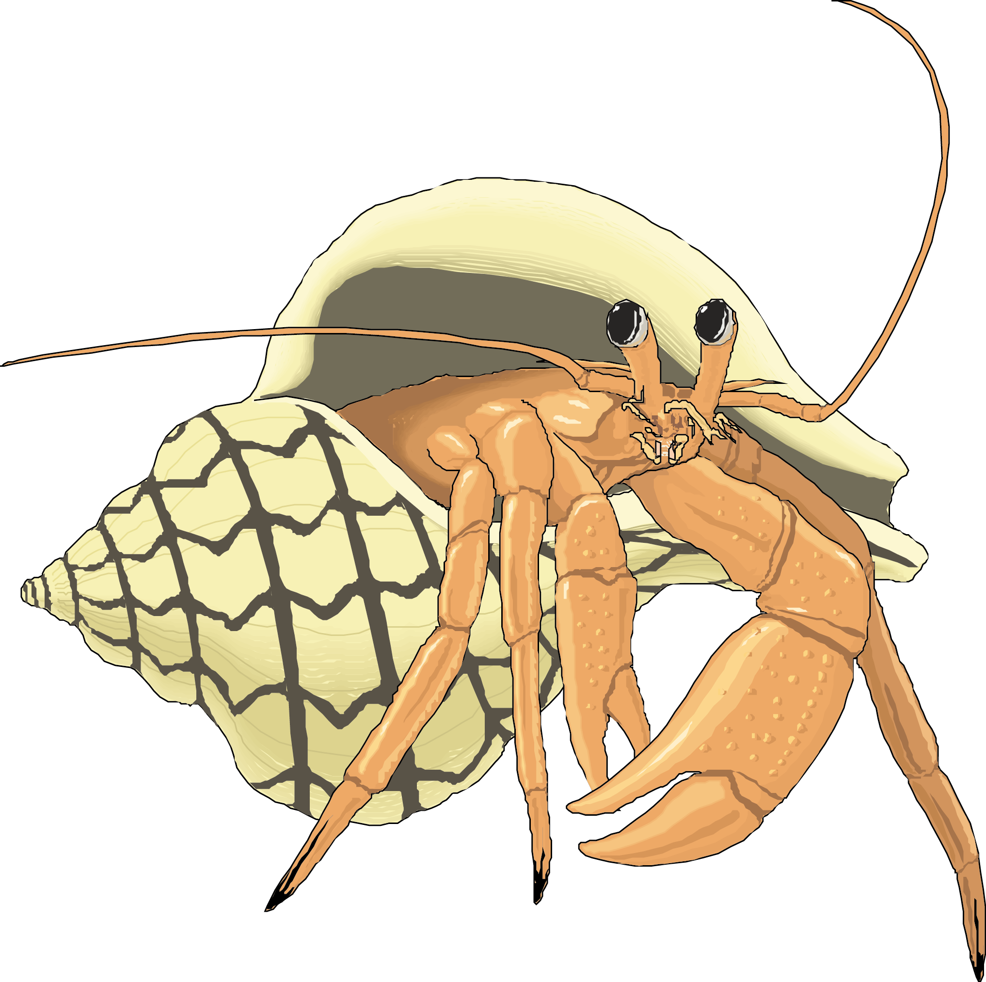 Hermit crab png. The adventures of periwinkle