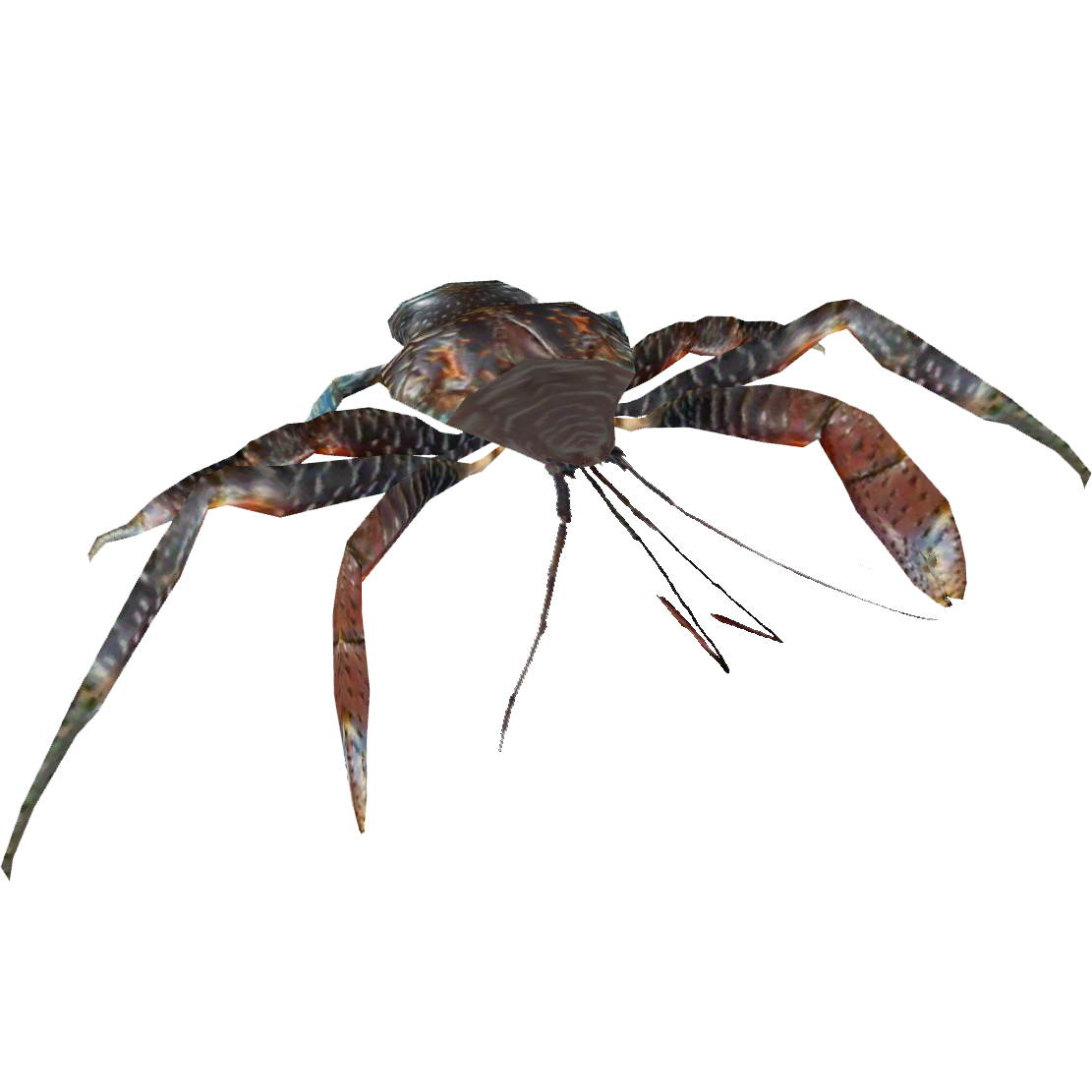 Spider crab png. Coconut whalebite zt download