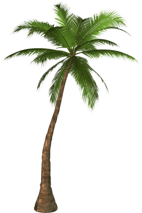 Coconut palm tree png. Free images toppng transparent
